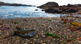 Fort Bragg, California, glass beach