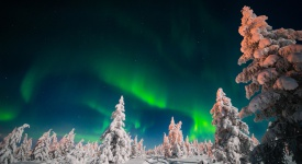 Winter night landscape with forest and polar northern light