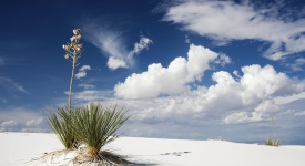 White Sand, New Mexico