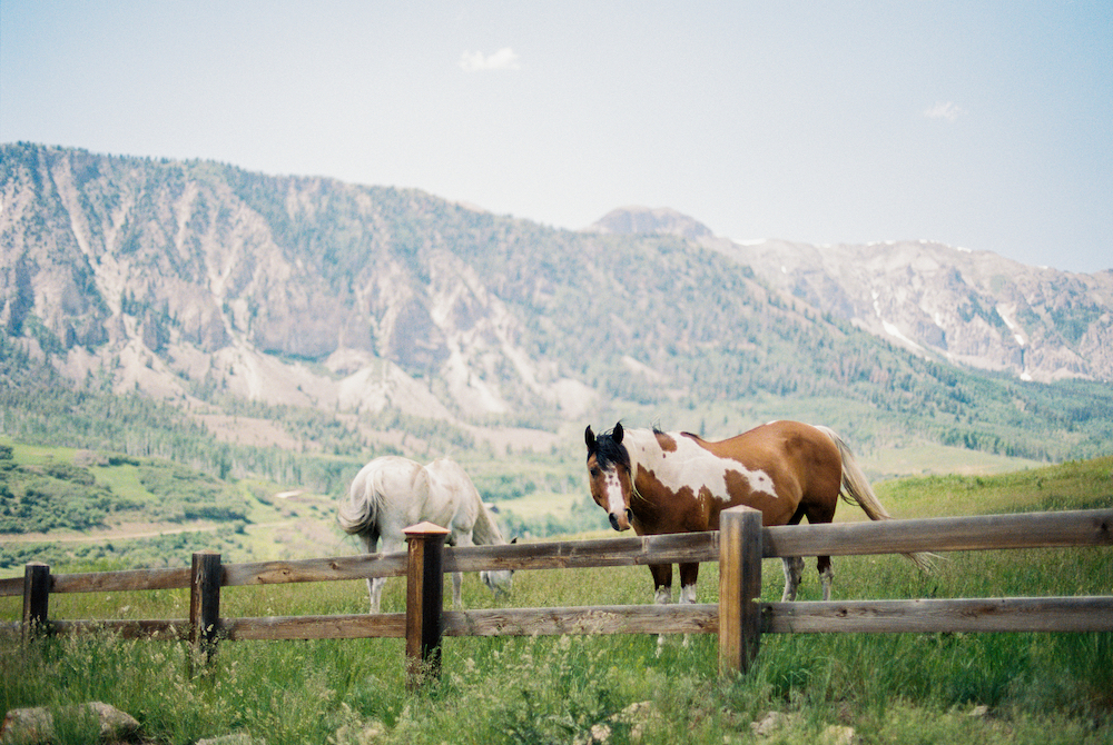 horses in front of mountains