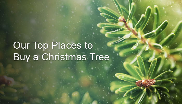 Best Places to Buy Your Christmas Tree