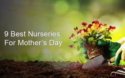 9 Best Garden Centres for Mother's Day