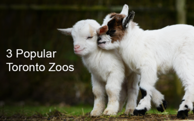 Zoos and Farms