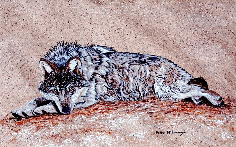 Mexican wolf study