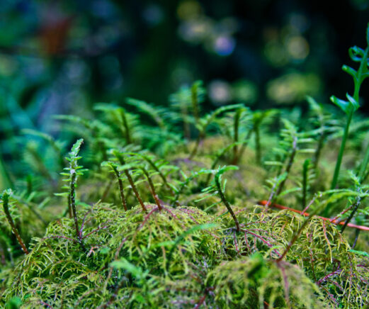 Bright green plants on a mossy log.