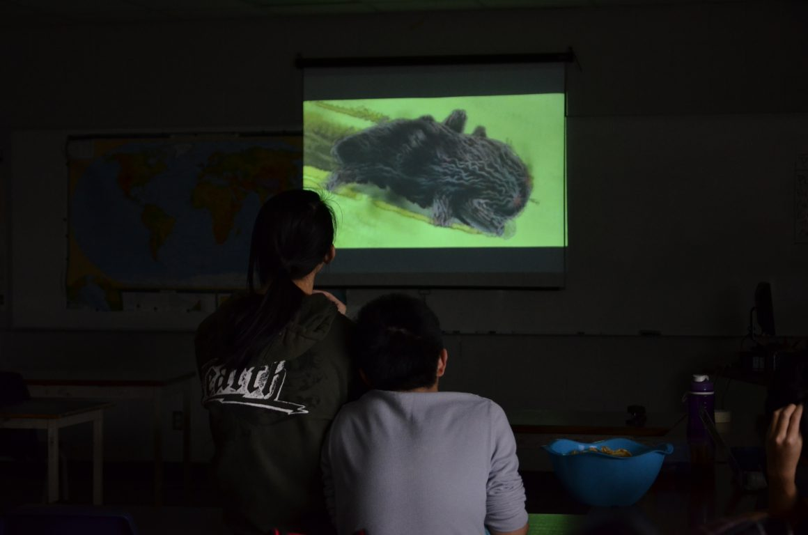 Eco Movie Screening