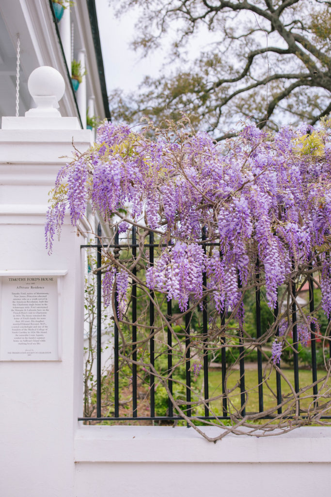 Blooming Wisteria in the Spring in Charleston | Rhyme & Reason
