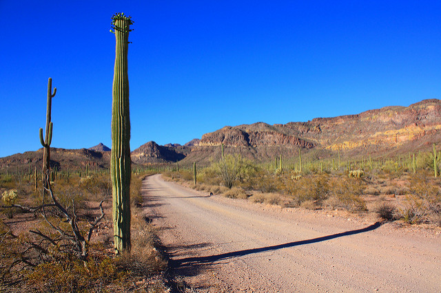 [img] Organ Pipe National Monument