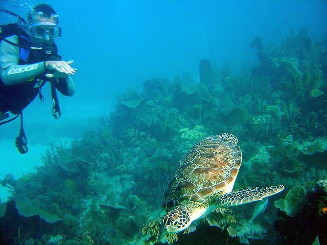 [img] John Pennekamp Coral Reef State Park