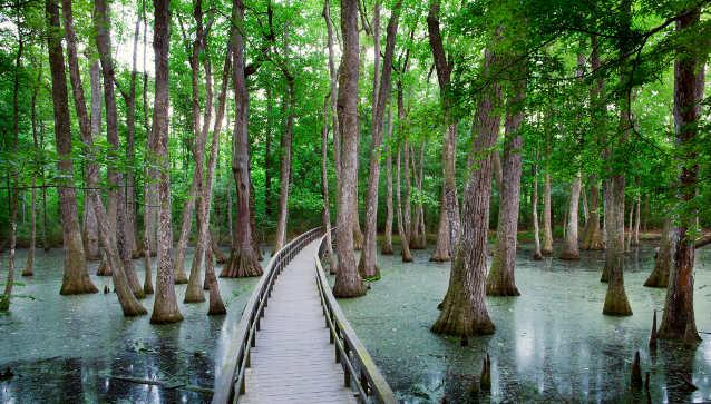 Cypress Swamp Natchez Trace Parkway Rvshare Com