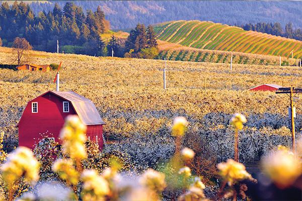 Farm near Hood River