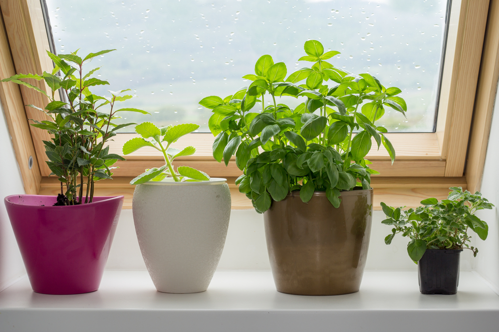 How to build an indoor herb garden for your rv rvshare workwithnaturefo