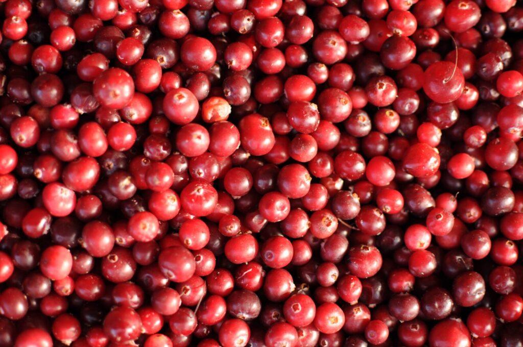 Cranberries at fall fair