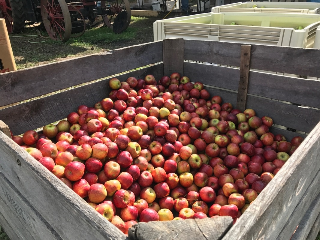Fall fairs: container of apples