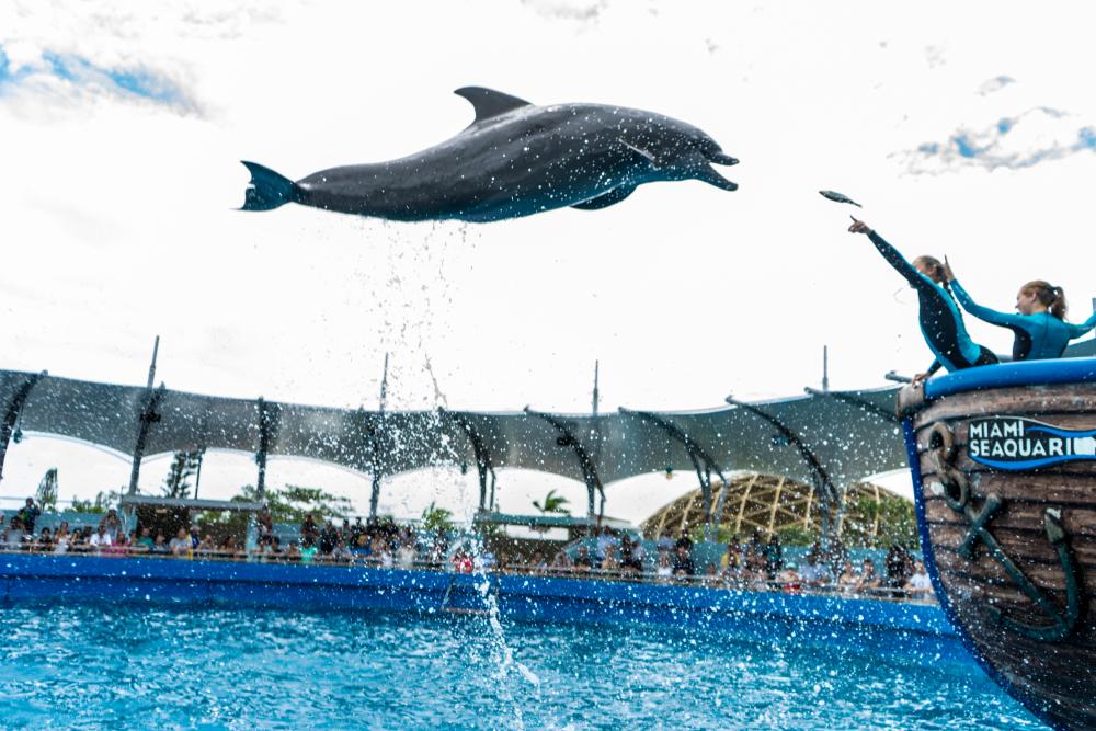 The Best Aquariums Across the Country - RVshare.com