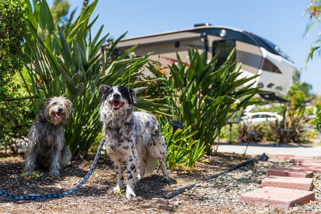 Escondido Pet Friendly RV Resort