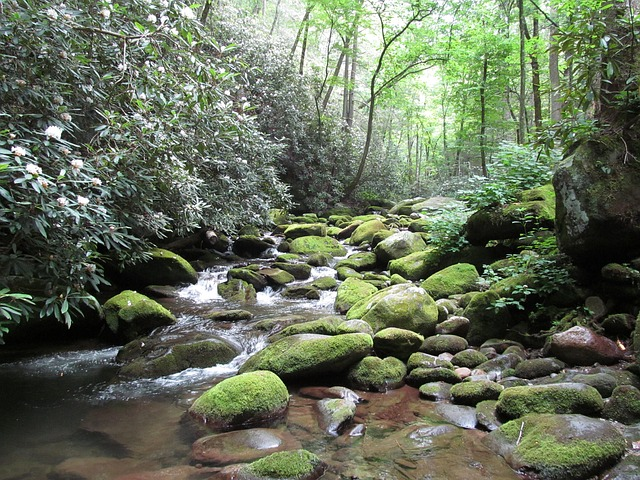 stream in Great Smoky Mountains National Park