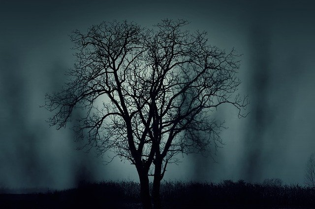 a bare tree in front of a gloomy sky