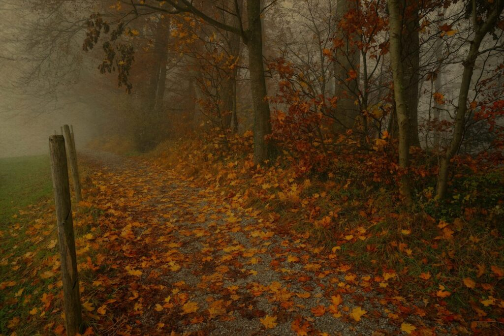 autumn leaves and a misty sky