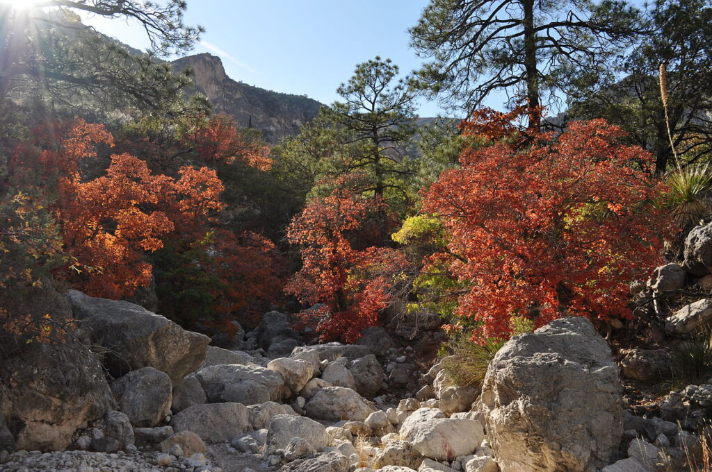 Autumn in Guadalupe Mountains National Park