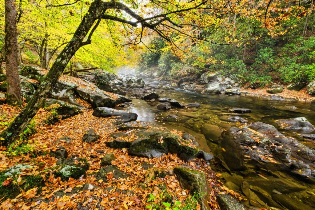 River and Fall Leaves in the Smoky Mountains