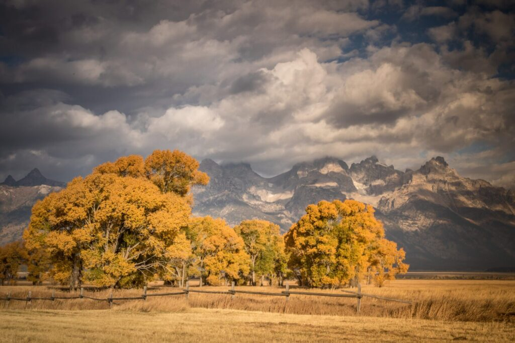 Fall foliage in Grand Tetons National Park
