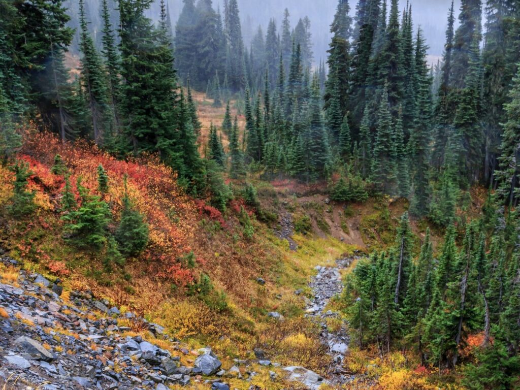 Foliage in Mount Rainier National Park
