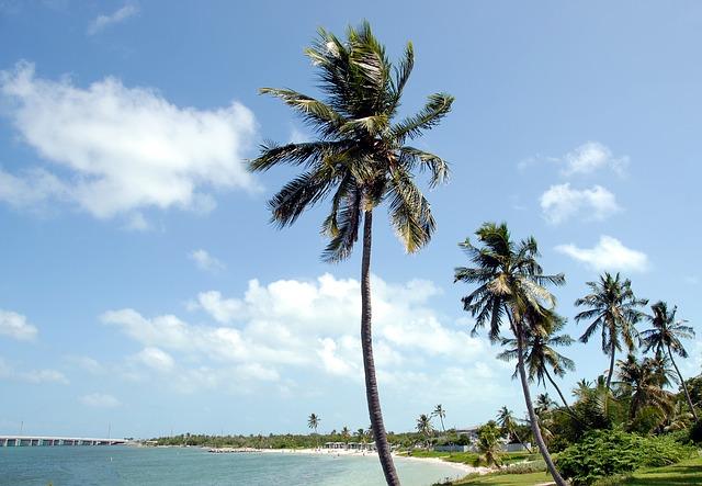 palm trees waving at Cahia Honda state park