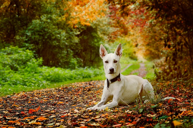 a dog resting on a bed of leaves