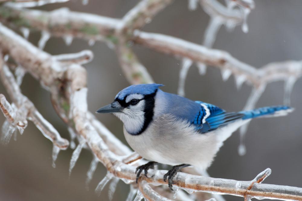 Winter Birdwatching - National Bird Day - RVshare.com