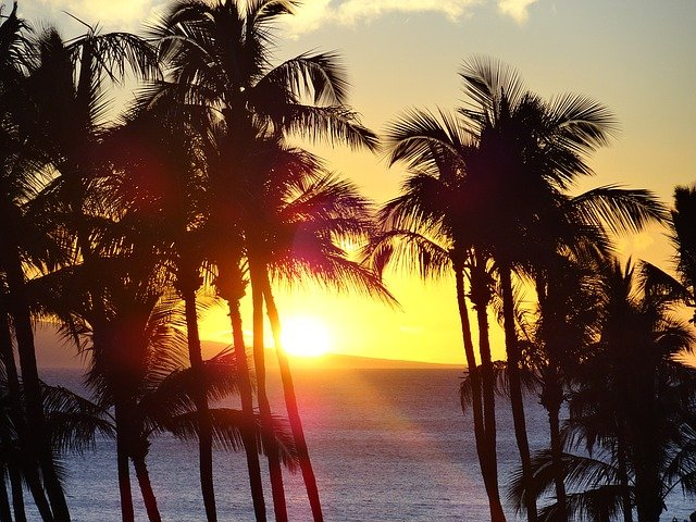 palm trees silhouetted by the setting sun in Hawaii
