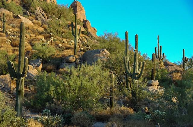 cactus in Phoenix, Arizona