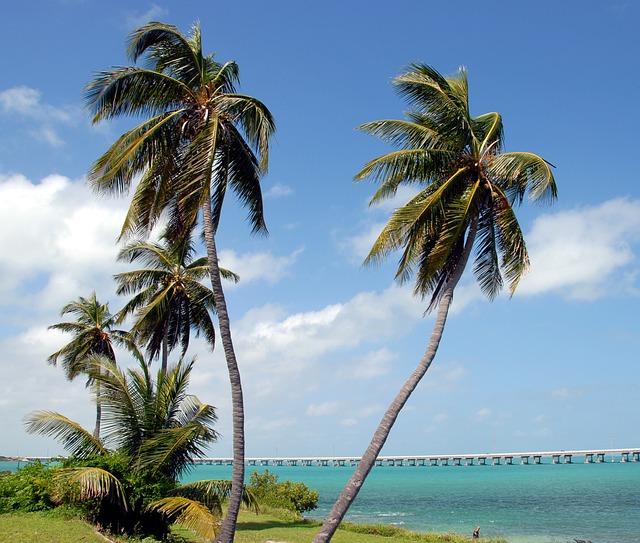 palm trees waving at Bahia Honda State Park