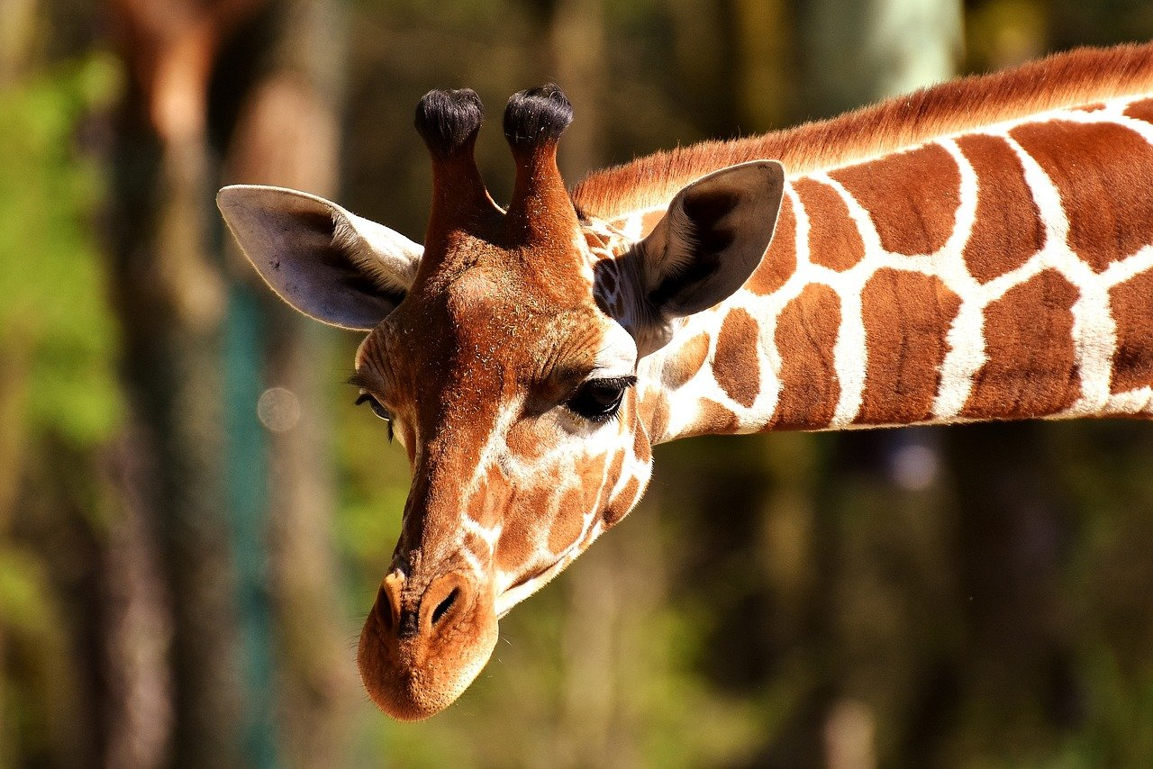 Giraffes and other wild new friends await at the Alabama Gulf Coast Zoo.