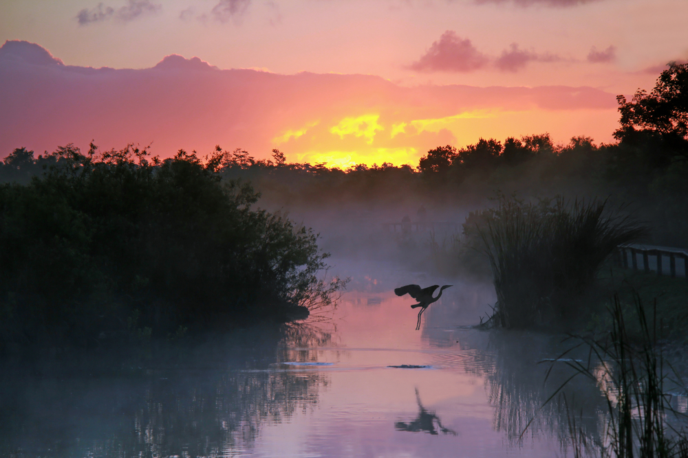 Everglades National Park at Sunrise with the Silhouette of a Flying Heron