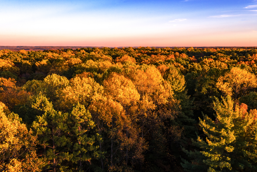 View from Hickory Ridge Fire Tower in Hoosier National Forest