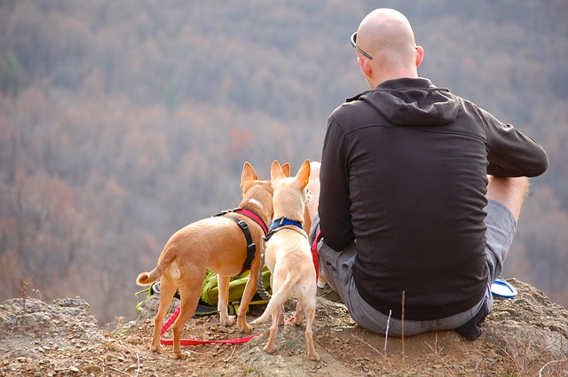 small dogs on a hike taking a break with their owner