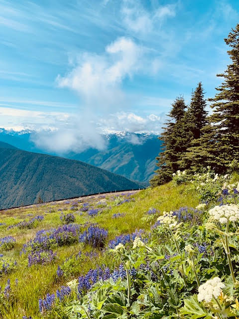 Sunny summer day at Hurricane Ridge in Olympic NP