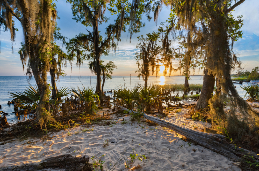 A sand dune covered with trees and green vegetation sits above a calm bay shore, the sun setting in the distance.