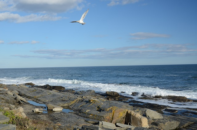 An image of the coast of Maine