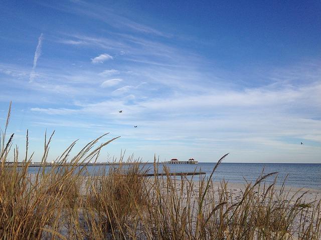 grasses and shoreline at Mississippi Gulf Coast