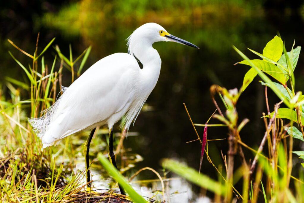 Bird at Everglades National Park