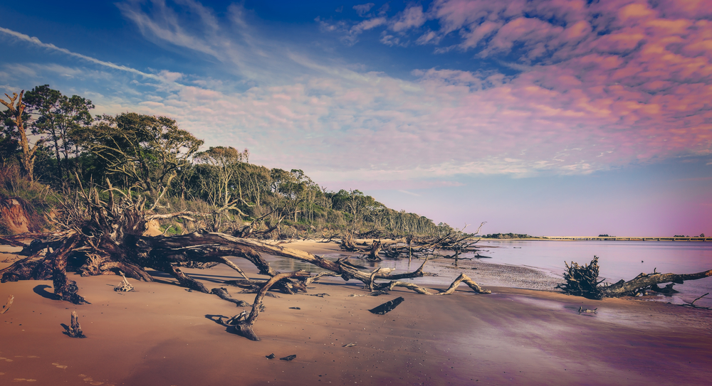 Black Rock Beach with its fallen trees on Big Talbot State Park, nearby Amelia Island State Park