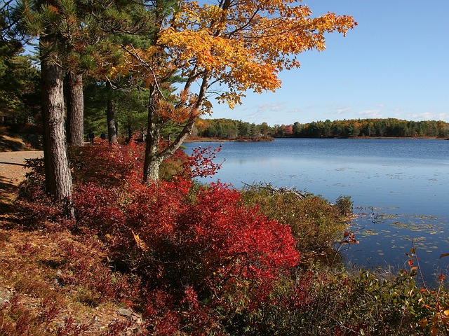 Acadia National Park in fall with red autumn leaves dropping next to a still lake