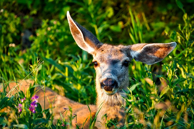 a mule deer among trees and greenery