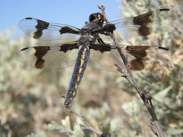 A dragon fly at Cowiche Canyon