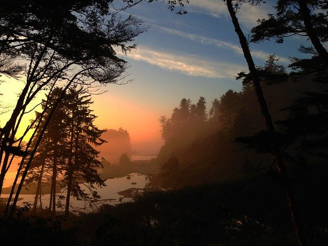Olympic National Park at sunset with fog showing silhouettes of trees and rocky shore