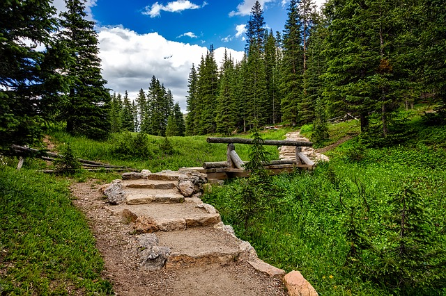 a trail in Rocky Mountain National Park with green trees and grass surrounding it