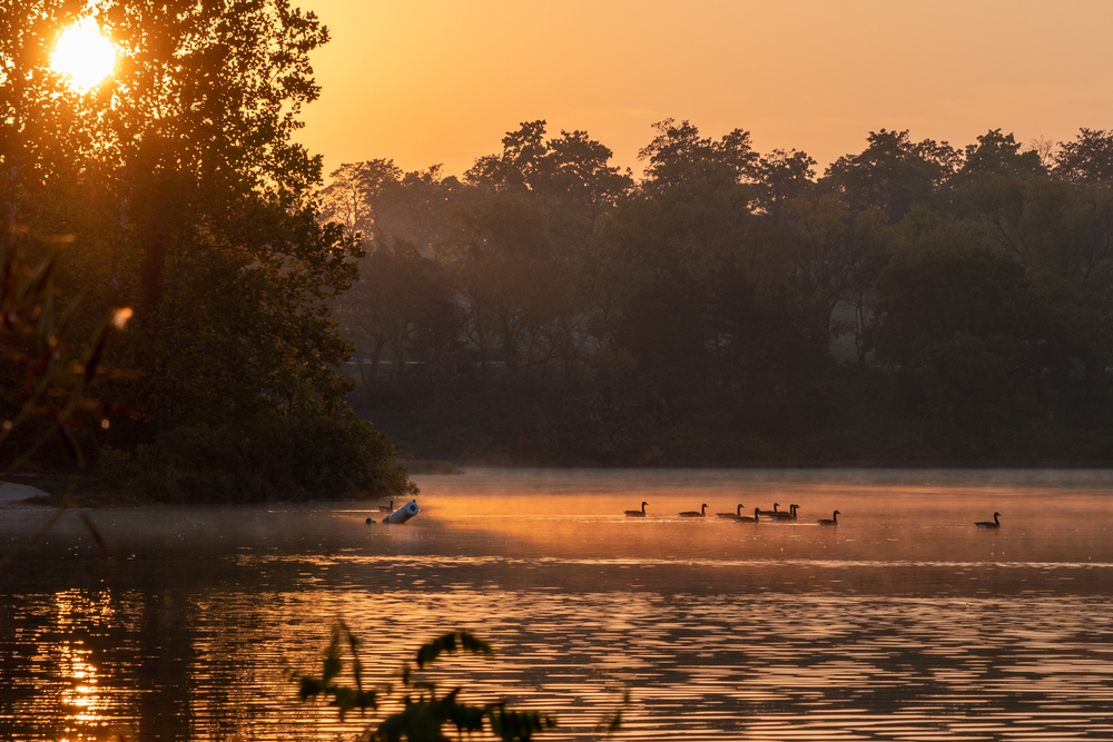Ducks swim on Shawnee Mission Lake at dawn
