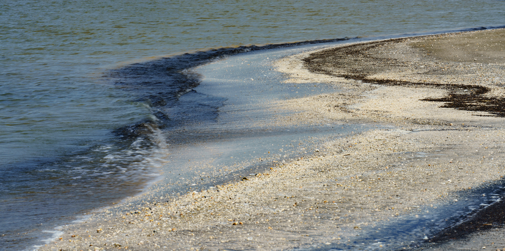 Curving shoreline with shell hash and sand at Rutherford Beach, Cameron Parish, Louisiana, on the Gulf of Mexico